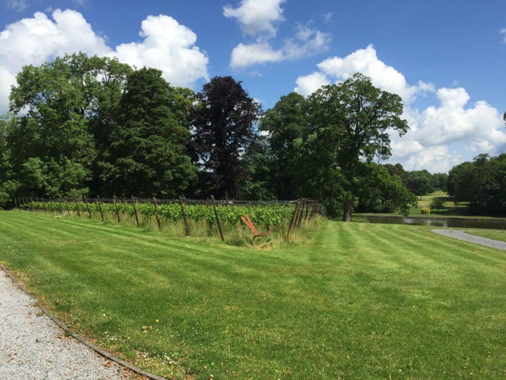vins bio belges du château de Bioul. la perspective sur le parc.