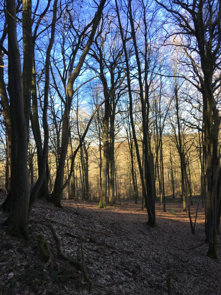 Dans le bois versant Nord