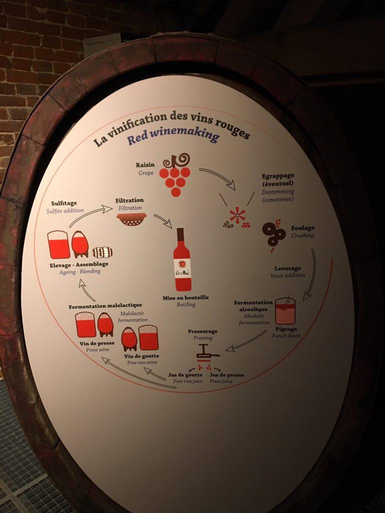 vins bio belges du château de Bioul. la vinification des vins rouges.