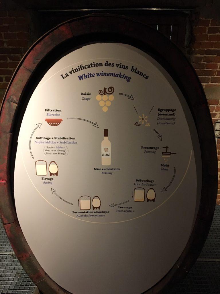 vins bio belges du château de Bioul. la vinification des vins blancs.