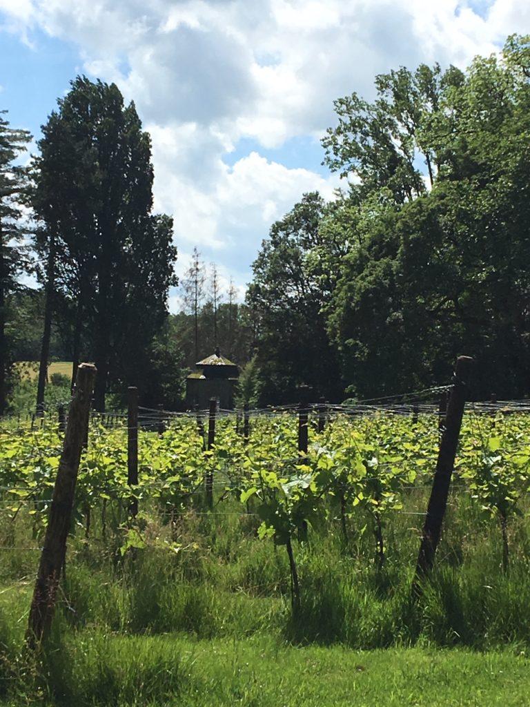 vins bio belges du château de Bioul. les vignes.